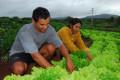 Cartilha lista técnicas agrícolas sustentáveis