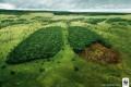Eduardo Galeano aponta quatro mentiras sobre o ambiente