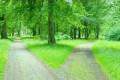 Sugestão para comemorar o dia Internacional do Meio Ambiente