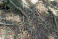 Limpeza no Parque dos Pinheiros pela Secretaria de Obras, Tudo Mata Nativa